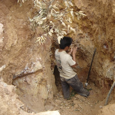 An illegal artisanal miner searching for gold nuggets